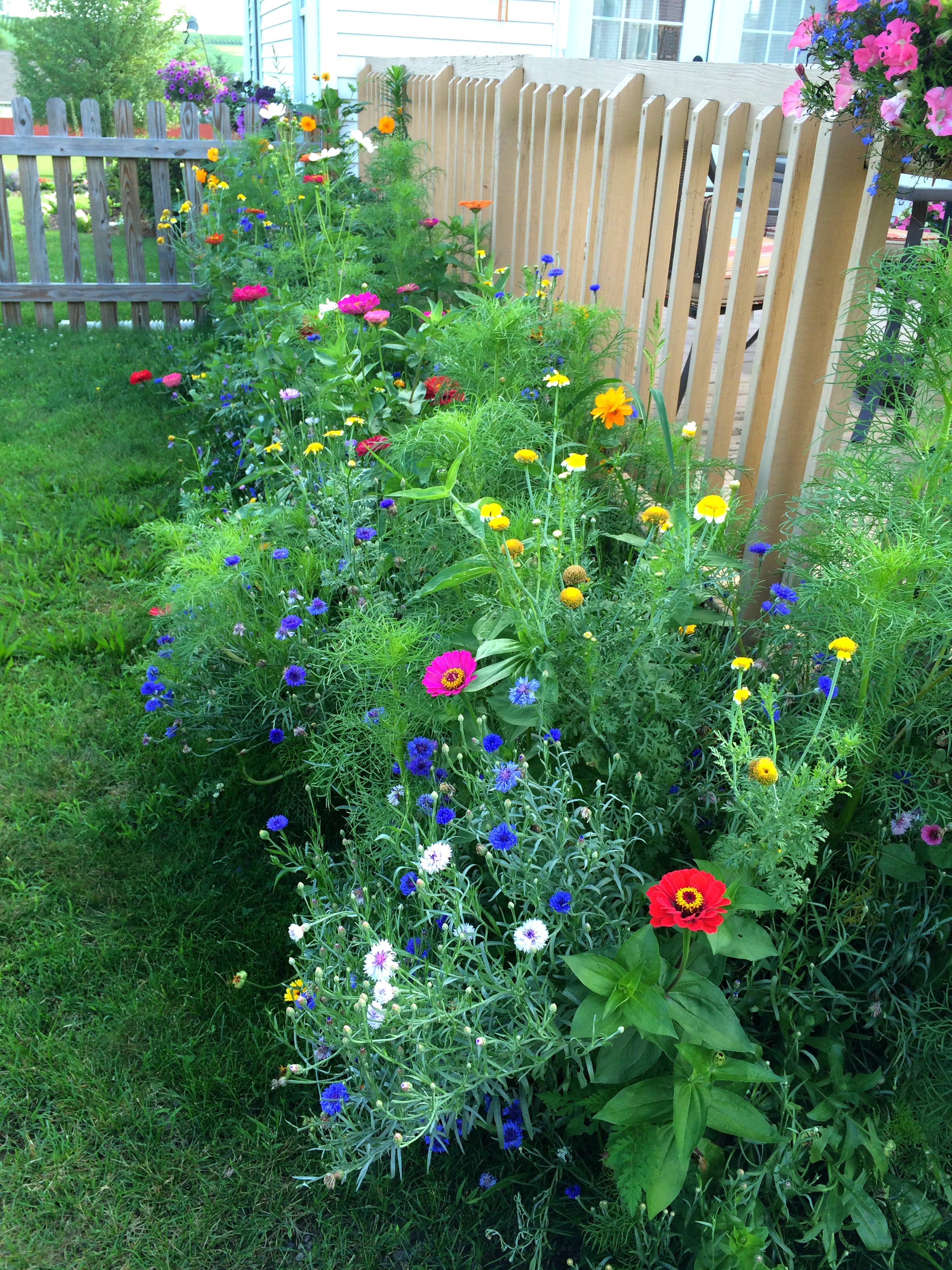 My Front Landscape (read More About That Big DIY Redo Project Here) And Wildflower  Garden (read About This DIY Project Here) Is In Full Bloom, Take A Look: